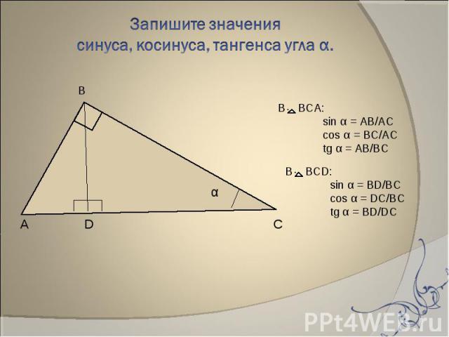 Запишите значения синуса, косинуса, тангенса угла α. В BCА:sin α = AB/ACcos α = BC/ACtg α = AB/BC В BCD:sin α = BD/BCcos α = DC/BCtg α = BD/DC