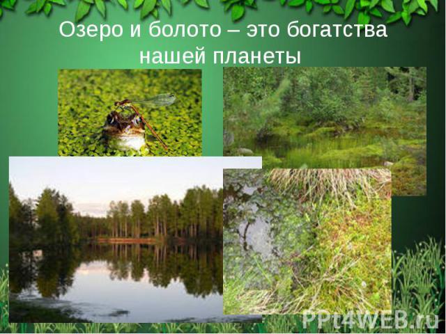 Озеро и болото – это богатства нашей планеты