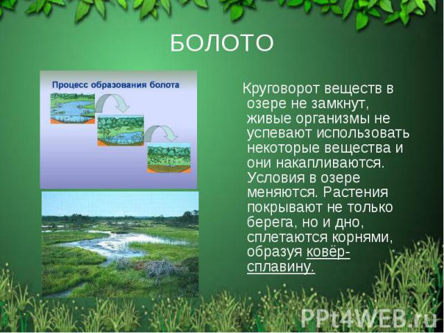 БОЛОТО Круговорот веществ в озере не замкнут, живые организмы не успевают использовать некоторые вещества и они накапливаются. Условия в озере меняются. Растения покрывают не только берега, но и дно, сплетаются корнями, образуя ковёр-сплавину.
