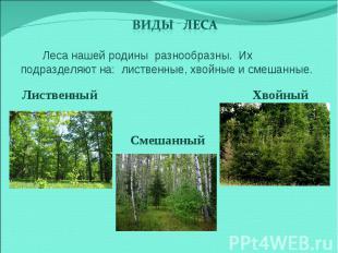 Виды леса Леса нашей родины разнообразны. Их подразделяют на: лиственные, хвойны