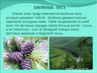 Хвойные леса Южнее зоны тундр появляются хвойные леса, которые называют тайгой.