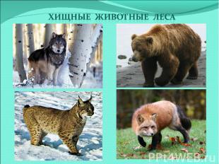 Хищные животные леса