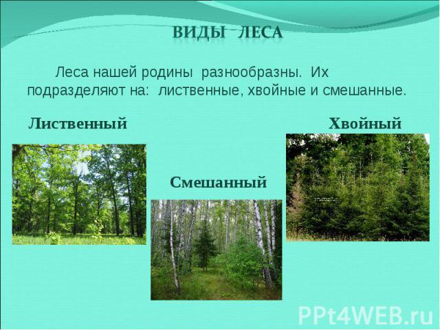 Виды леса Леса нашей родины разнообразны. Их подразделяют на: лиственные, хвойные и смешанные. Лиственный Смешанный Хвойный