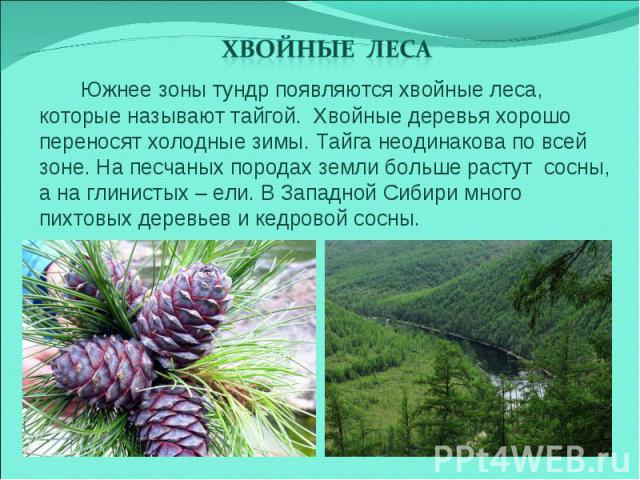 Хвойные леса Южнее зоны тундр появляются хвойные леса, которые называют тайгой. Хвойные деревья хорошо переносят холодные зимы. Тайга неодинакова по всей зоне. На песчаных породах земли больше растут сосны, а на глинистых – ели. В Западной Сибири мн…