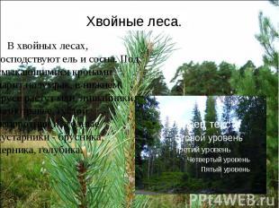 Хвойные леса. В хвойных лесах, господствуют ель и сосна. Под смыкающимися кронам