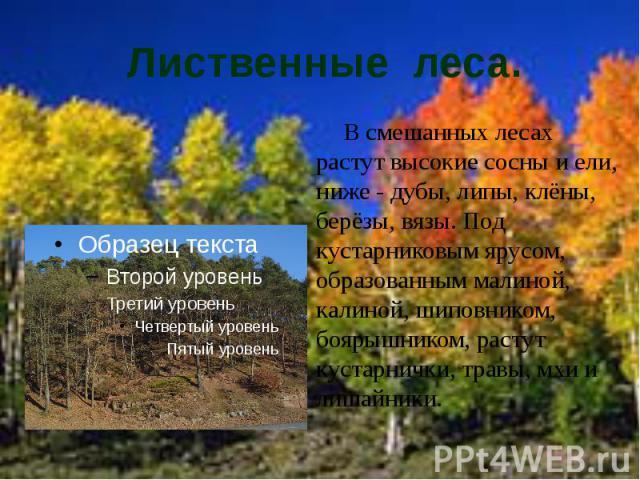Лиственные леса. В смешанных лесах растут высокие сосны и ели, ниже - дубы, липы, клёны, берёзы, вязы. Под кустарниковым ярусом, образованным малиной, калиной, шиповником, боярышником, растут кустарнички, травы, мхи и лишайники.