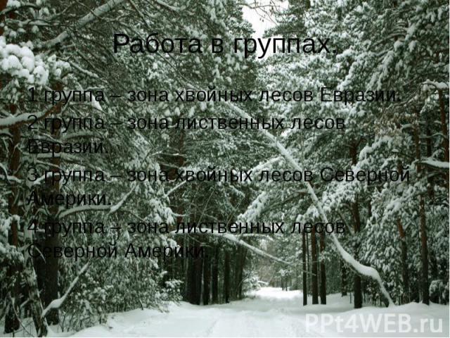 1 группа – зона хвойных лесов Евразии.2 группа – зона лиственных лесов Евразии.3 группа – зона хвойных лесов Северной Америки.4 группа – зона лиственных лесов Северной Америки.