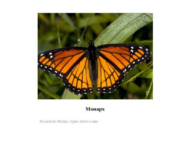 МонархВесной из тёплых стран летит к нам.