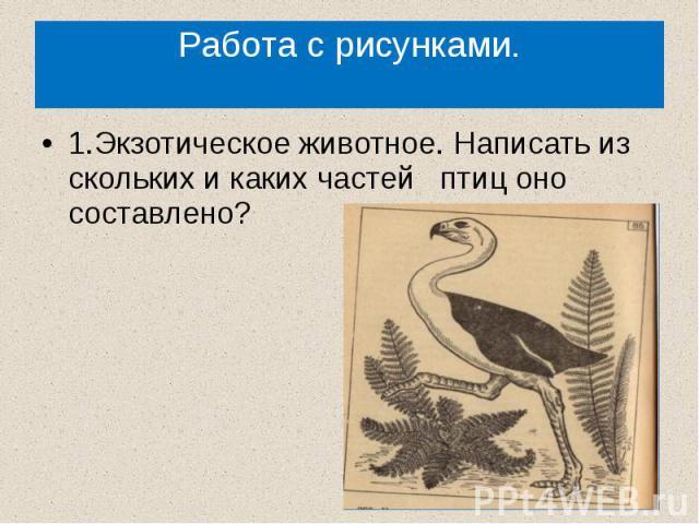 Работа с рисунками.1.Экзотическое животное. Написать из скольких и каких частей птиц оно составлено?