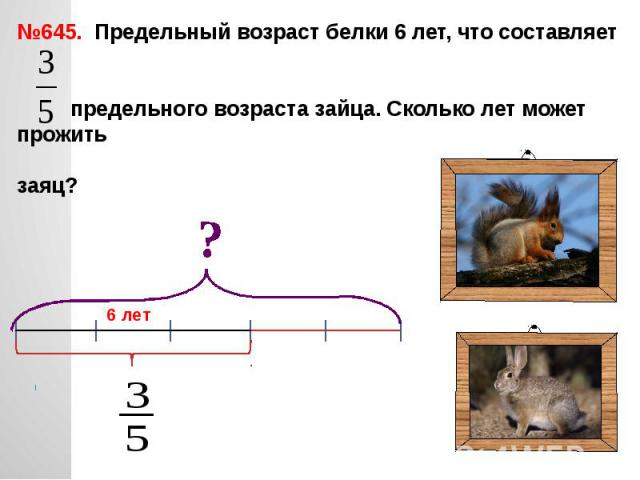 №645. Предельный возраст белки 6 лет, что составляет предельного возраста зайца. Сколько лет может прожить заяц?