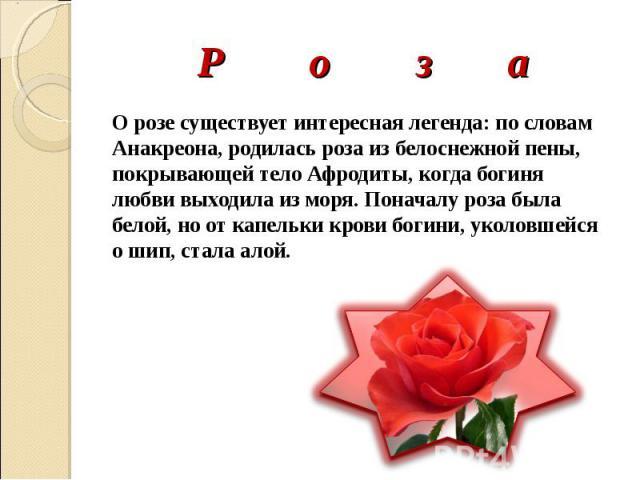 Р о з а О розе существует интересная легенда: по словам Анакреона, родилась роза из белоснежной пены, покрывающей тело Афродиты, когда богиня любви выходила из моря. Поначалу роза была белой, но от капельки крови богини, уколовшейся о шип, стала алой.