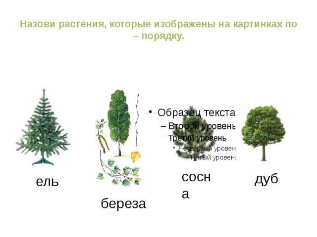 http://ppt4web.ru/muzyka/puteshestvie-k-muzykalnomu-sozvezdiju.html ель береза сосна