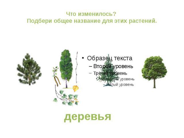 Что изменилось? Подбери общее название для этих растений. деревья