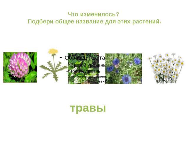 Что изменилось? Подбери общее название для этих растений.травы