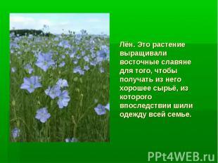 Лён. Это растение выращивали восточные славяне для того, чтобы получать из него