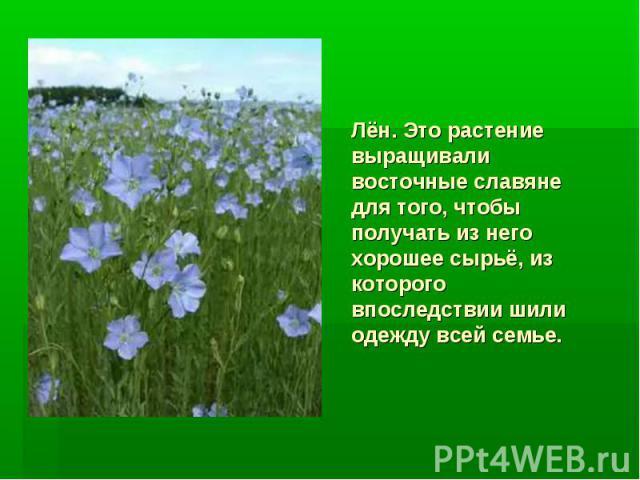 Лён. Это растение выращивали восточные славяне для того, чтобы получать из него хорошее сырьё, из которого впоследствии шили одежду всей семье.
