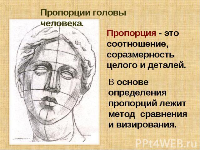 Пропорции головы человека. Пропорция - это соотношение, соразмерность целого и деталей. В основе определения пропорций лежит метод сравнения и визирования.
