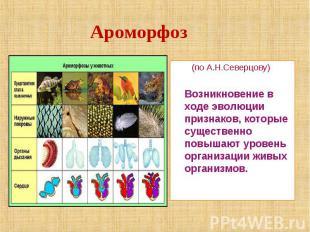 Ароморфоз (по А.Н.Северцову) Возникновение в ходе эволюции признаков, которые су