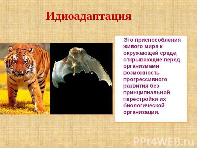 Идиоадаптация Это приспособления живого мира к окружающей среде, открывающие перед организмами возможность прогрессивного развития без принципиальной перестройки их биологической организации.