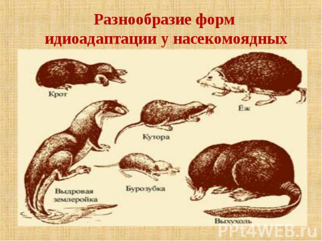 Разнообразие форм идиоадаптации у насекомоядных