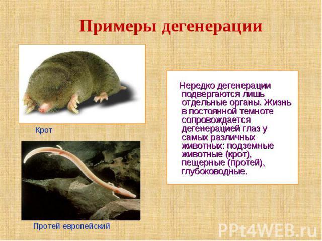 Примеры дегенерации Нередко дегенерации подвергаются лишь отдельные органы. Жизнь в постоянной темноте сопровождается дегенерацией глаз у самых различных животных: подземные животные (крот), пещерные (протей), глубоководные.