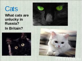 Cats What cats are unlucky in Russia? In Britain?