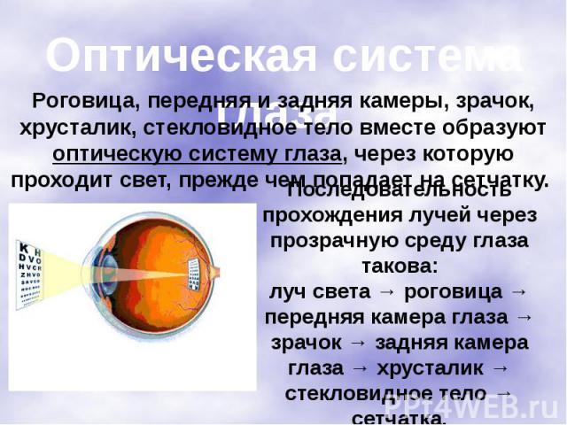 Оптическая система глаза. Роговица, передняя и задняя камеры, зрачок, хрусталик, стекловидное тело вместе образуют оптическую систему глаза, через которую проходит свет, прежде чем попадает на сетчатку. Последовательность прохождения лучей через про…