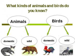 What kinds of animals and birds do you know?