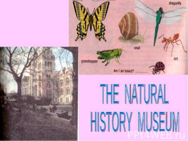 THE NATURALHISTORY MUSEUM
