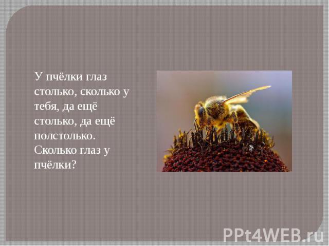 У пчёлки глаз столько, сколько у тебя, да ещё столько, да ещё полстолько. Сколько глаз у пчёлки?