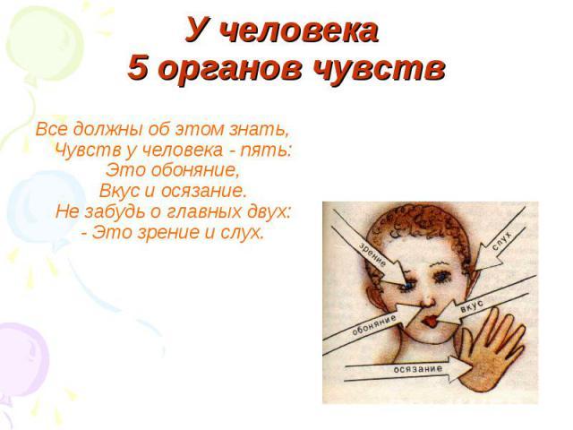 У человека 5 органов чувств Все должны об этом знать,Чувств у человека - пять:Это обоняние,Вкус и осязание.Не забудь о главных двух:- Это зрение и слух.