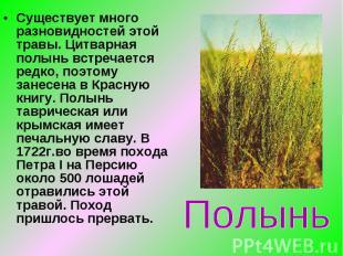 Существует много разновидностей этой травы. Цитварная полынь встречается редко,