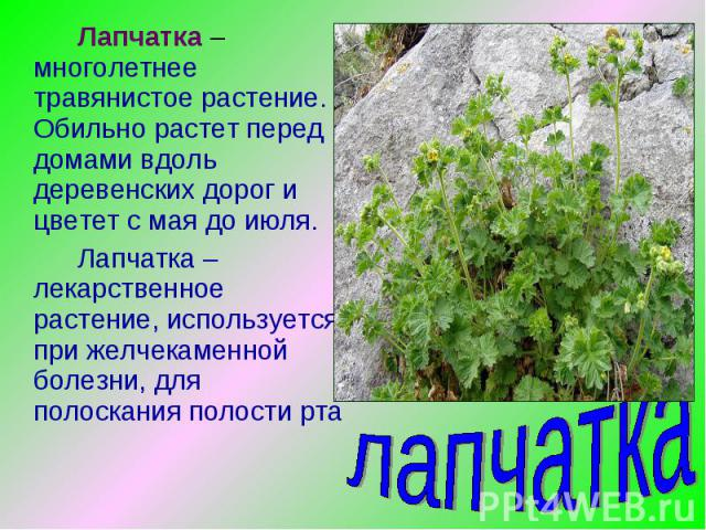 Лапчатка – многолетнее травянистое растение. Обильно растет перед домами вдоль деревенских дорог и цветет с мая до июля.Лапчатка – лекарственное растение, используется при желчекаменной болезни, для полоскания полости рта лапчатка