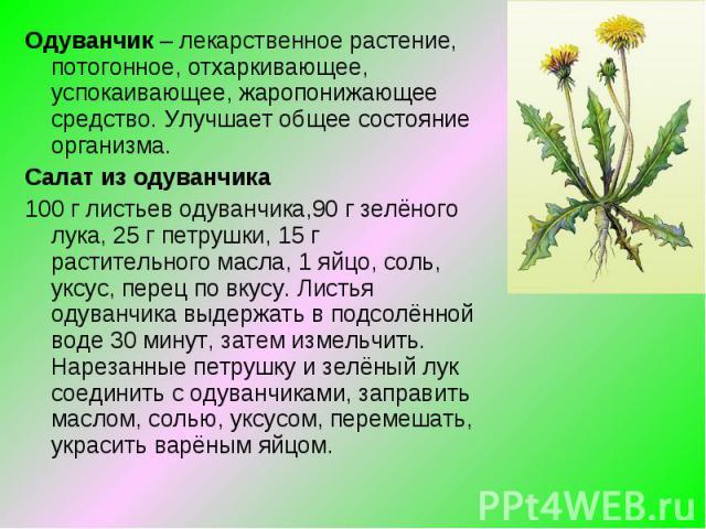 Одуванчик – лекарственное растение, потогонное, отхаркивающее, успокаивающее, жаропонижающее средство. Улучшает общее состояние организма.Салат из одуванчика100 г листьев одуванчика,90 г зелёного лука, 25 г петрушки, 15 г растительного масла, 1 яйцо…