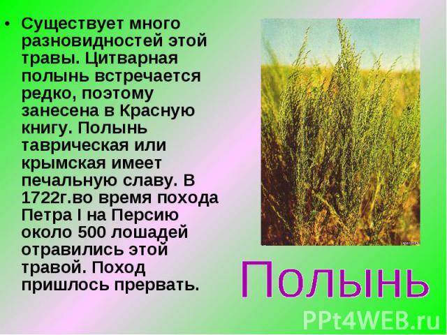 Существует много разновидностей этой травы. Цитварная полынь встречается редко, поэтому занесена в Красную книгу. Полынь таврическая или крымская имеет печальную славу. В 1722г.во время похода Петра I на Персию около 500 лошадей отравились этой трав…