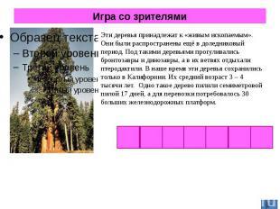 Игра со зрителями Эти деревья принадлежат к «живым ископаемым». Они были распрос