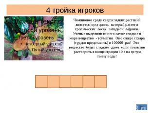 4 тройка игроков Чемпионом среди сверхсладких растений является кустарник, котор