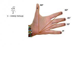 , n – номер пальца