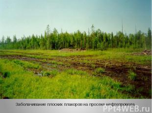 Заболачивание плоских плакоров на просеке нефтепровода