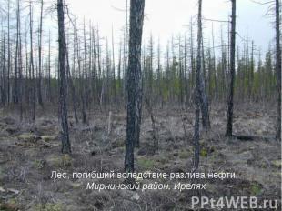 Лес, погибший вследствие разлива нефти. Мирнинский район, Ирелях