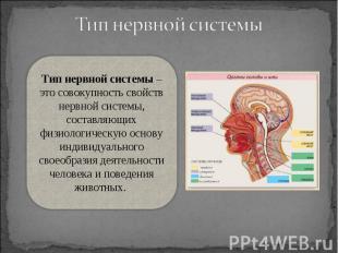 Тип нервной системы – это совокупность свойств нервной системы, составляющих физ