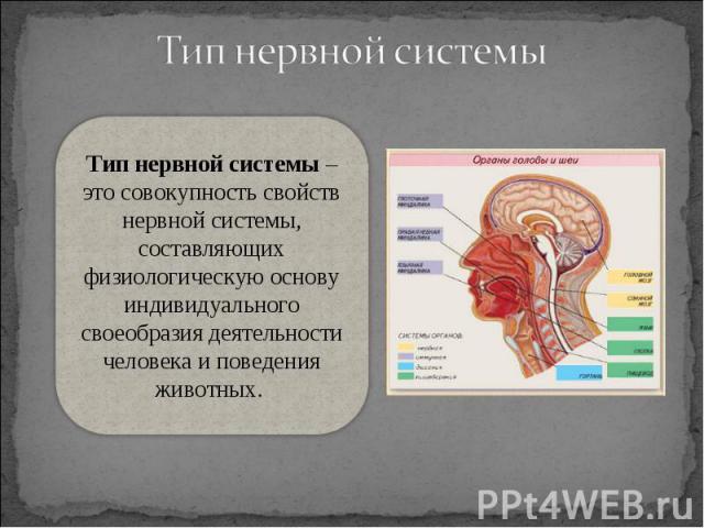 Тип нервной системы – это совокупность свойств нервной системы, составляющих физиологическую основу индивидуального своеобразия деятельности человека и поведения животных.
