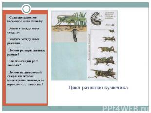Сравните взрослое насекомое и его личинку.Выявите между ними сходство.Выявите ме