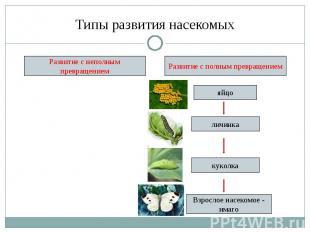 Типы развития насекомых