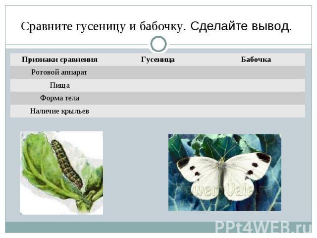 Сравните гусеницу и бабочку. Сделайте вывод.