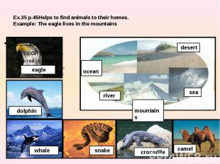 Ex.35 p.45Helps to find animals to their homes.Example: The eagle lives in the m