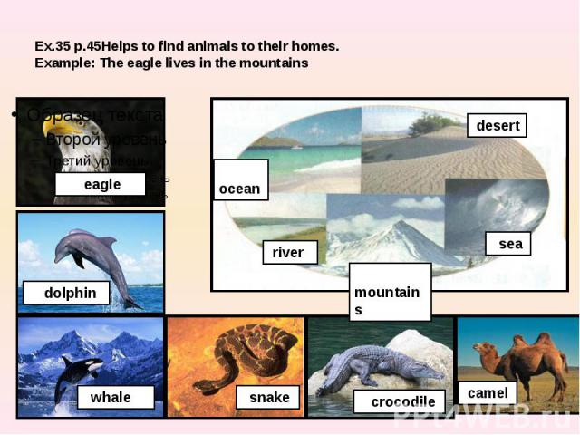 Ex.35 p.45Helps to find animals to their homes.Example: The eagle lives in the mountains