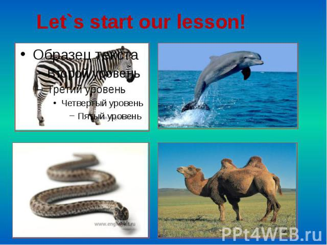 Let`s start our lesson!