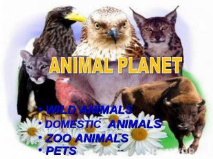 Animal planet WILD ANIMALS DOMESTIC ANIMALS ZOO ANIMALS PETS