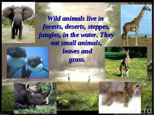 Wild animals live in forests, deserts, steppes, jungles, in the water. They eat